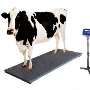 Digital Cow Scale